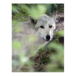 Wolf-Charme Postkarte