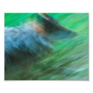 """Wolf-Geschwindigkeit 10"""" x 8"""", KodakproFoto-Papier Fotodruck"""