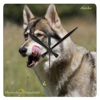 Wolf-Uhr Quadratische Wanduhr