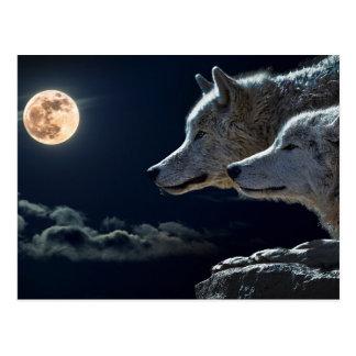 Wolf-Wölfe, die am Vollmond nachts heulen Postkarte