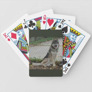 Wolfdog Alter 10 Monate Bicycle Spielkarten