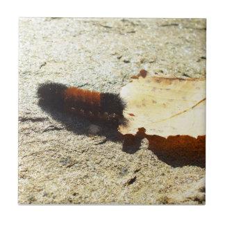 Wolliger Bärn-Raupe Keramikfliese
