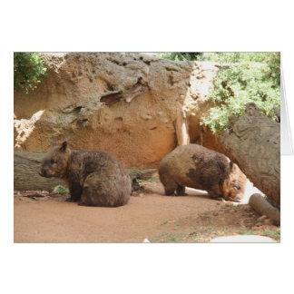Wombat Himmel Karte