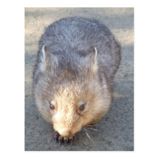 Wombat Postkarte