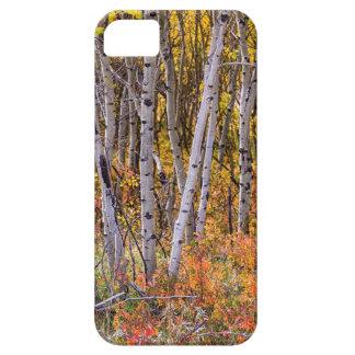 Wunderbares Holz-Märchenland Schutzhülle Fürs iPhone 5