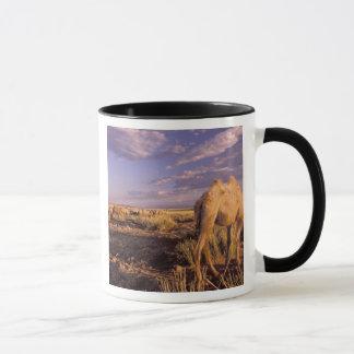 Wüste Asiens, Mongolei, Gobi, großer Gobi Tasse