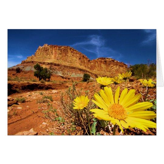 Wüsten-Blumen Grußkarte