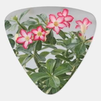 Wüsten-Rosen-Blumen-Pflanze Plek