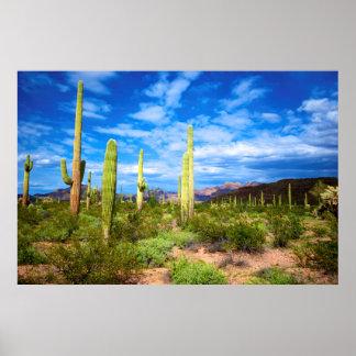 Wüstenkaktuslandschaft, Arizona Poster
