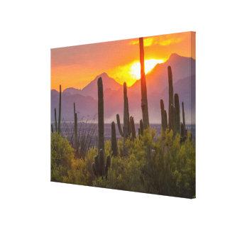 Wüstenkaktussonnenuntergang, Arizona Leinwanddruck