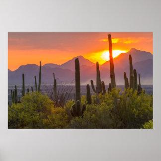 Wüstenkaktussonnenuntergang, Arizona Poster