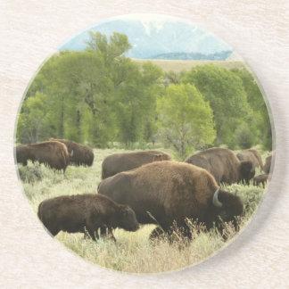 Wyoming-Bison-Natur-Tier-Fotografie Getränkeuntersetzer