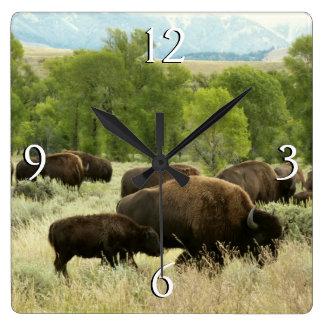 Wyoming-Bison-Natur-Tier-Fotografie Quadratische Wanduhr
