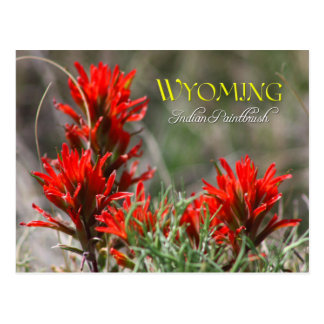 Wyoming-Staats-Blume: Indischer Malerpinsel Postkarte