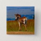 Zebra auf dem Berg Quadratischer Button 5,1 Cm