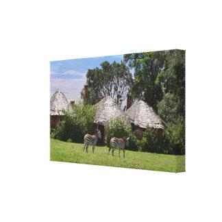 Zebras am Ngorongoro Krater-Häuschen Leinwanddruck