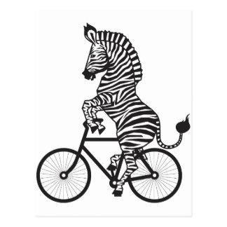 Zèbre sur le vélo carte postale