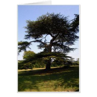 Zedern-Baum Karte