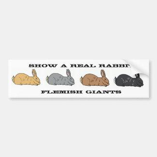 Zeigen Sie einem wirklichen Kaninchen flämischen Autoaufkleber