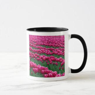 Zeigen Sie Garten der Frühling-blühenden Tasse
