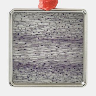 Zellen einer Wurzel unter dem Mikroskop Silbernes Ornament