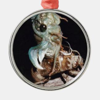 Zikade, die von der Muschel auftaucht Rundes Silberfarbenes Ornament