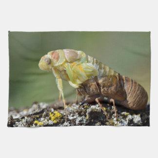 Zikade, die von seinem exuvia auftaucht handtuch