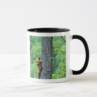 Zimt farbiger schwarzer Bär im Baum herein Tasse