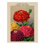 Zinnia français vintage Zinnas de paquet de graine Cartes Postales