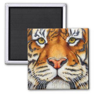 Zu nah - sibirischer Tiger-Magnet Quadratischer Magnet