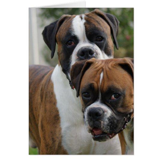 Zwei Boxer-Hunde Grußkarte