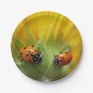 Zwei Dame Bugs auf einer Sonnenblume Pappteller