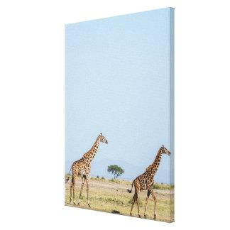 Zwei Giraffen-Gehen Leinwanddruck