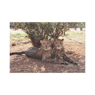 Zwei junge Geparde Leinwanddruck