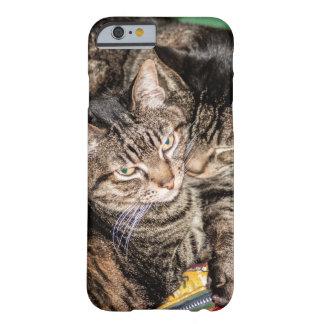 Zwei Katzen, die auf einem bunten Schlafsack Barely There iPhone 6 Hülle
