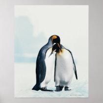 Zwei liebevolle Pinguine Poster