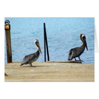 Zwei Pelikane auf dem Pier, Curaçao, Karibisches Karte