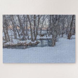 Zwei Rotwild im Holz am Sonnenuntergang im Winter