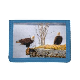 Zwei sitzender kahler Eagles auf Kai-Tier-Foto