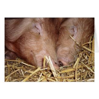 Zwei süße Schlafenschwein-Fotografie - leere Karte