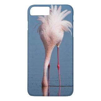 Zwei wenige Flamingos (Phoenicopterus iPhone 8 Plus/7 Plus Hülle