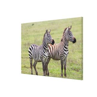 Zwei Zebras nebeneinander Leinwanddruck