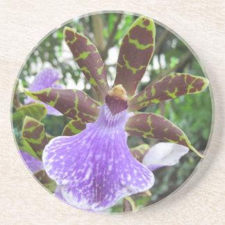 Zygopetalum Orchideen-Untersetzer Getränkeuntersetzer