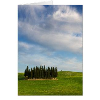 Zypresse-Bäume in der vertikalen Grußkarte Toskana
